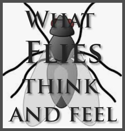 what-flies-think-feel