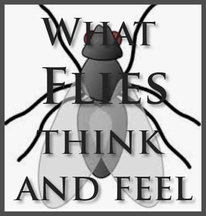 what-flies-think-feel
